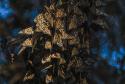 NIKON D500_03)