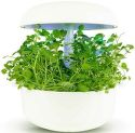 Plantui Watercress Žerucha (3ks)