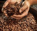 Tchibo Barista Espresso 1kg, Zrnková káva