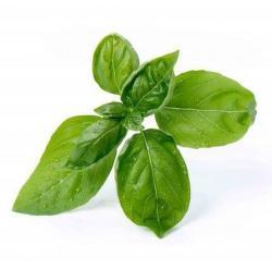 Véritable Lingot Basilic Bio substrát (bazalka)