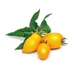 Véritable Lingot Mini Yellow Tomato substrát (mini žlté paradajky)