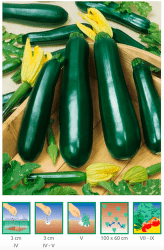 Cuketa Zelená 3 g