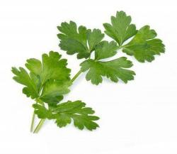 Véritable Lingot Parsley Bio substrát (petržlen)