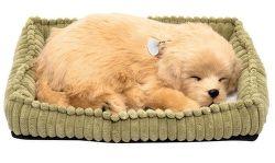SOMOGYI Golden Retriever, dýchajúci pes