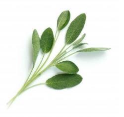 Véritable Lingot Sage Bio substrát (šalvia)