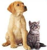 Vysávače do domácnosti so zvieratkami