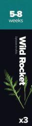 Plantui Wild Rocket Rukola tenkolistá (3ks)