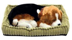 SOMOGYI Beagle, dýchajúci pes