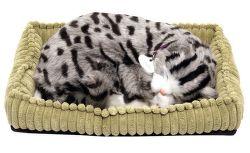 SOMOGYI Gray Tabby, dýchajúca mačka