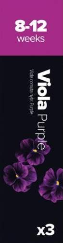 Plantui Sirôtka rohatá purpurová