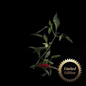 Chili D. Red,3k. Chilli (limit. edice) (1)